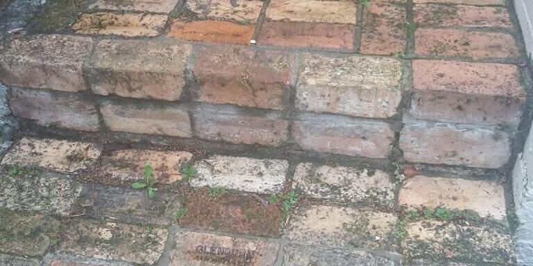 Mould growing on bricks